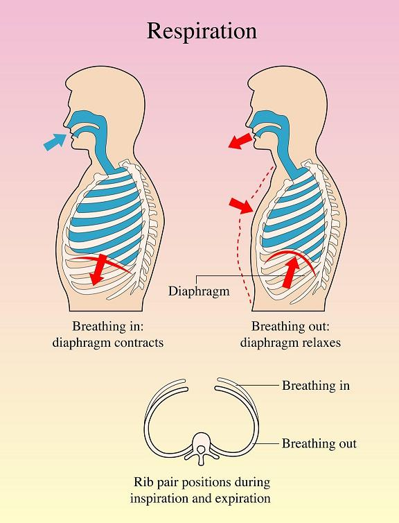 Breathing process