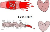 Vasodilation and vasoconstriction: effects of CO2
